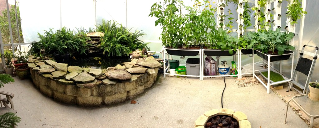 2 Month Old Aquaponics System - Panoramic View
